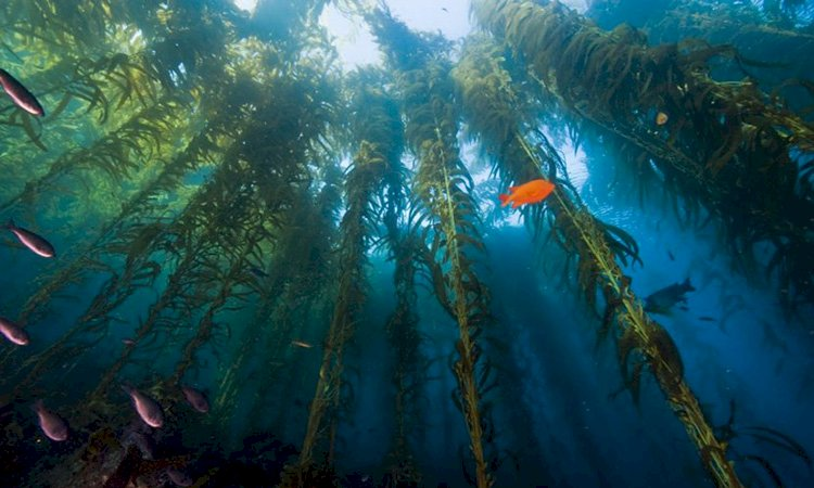 Underwater Forest in South America Remains the Same