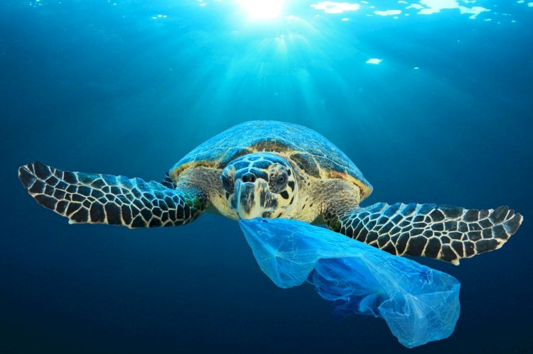 Sea Turtles' Attraction to Plastic Leads to their Extinction.