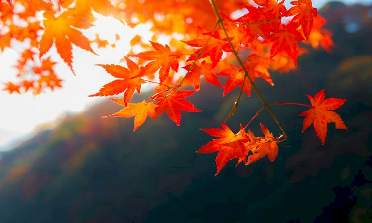 Reasons Behind Leaves Color Changing in Fall