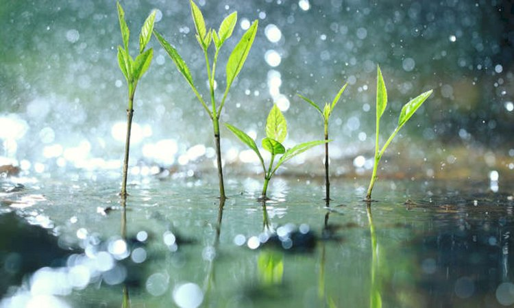 Do Plants Panic When It Rains?